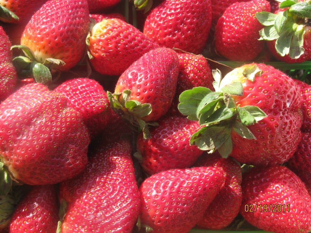 Strawberry Shortcakes with Scones